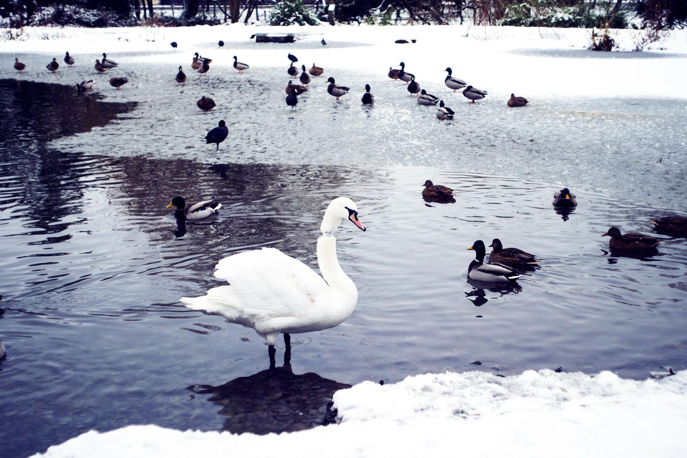 Snow Day Glasgow