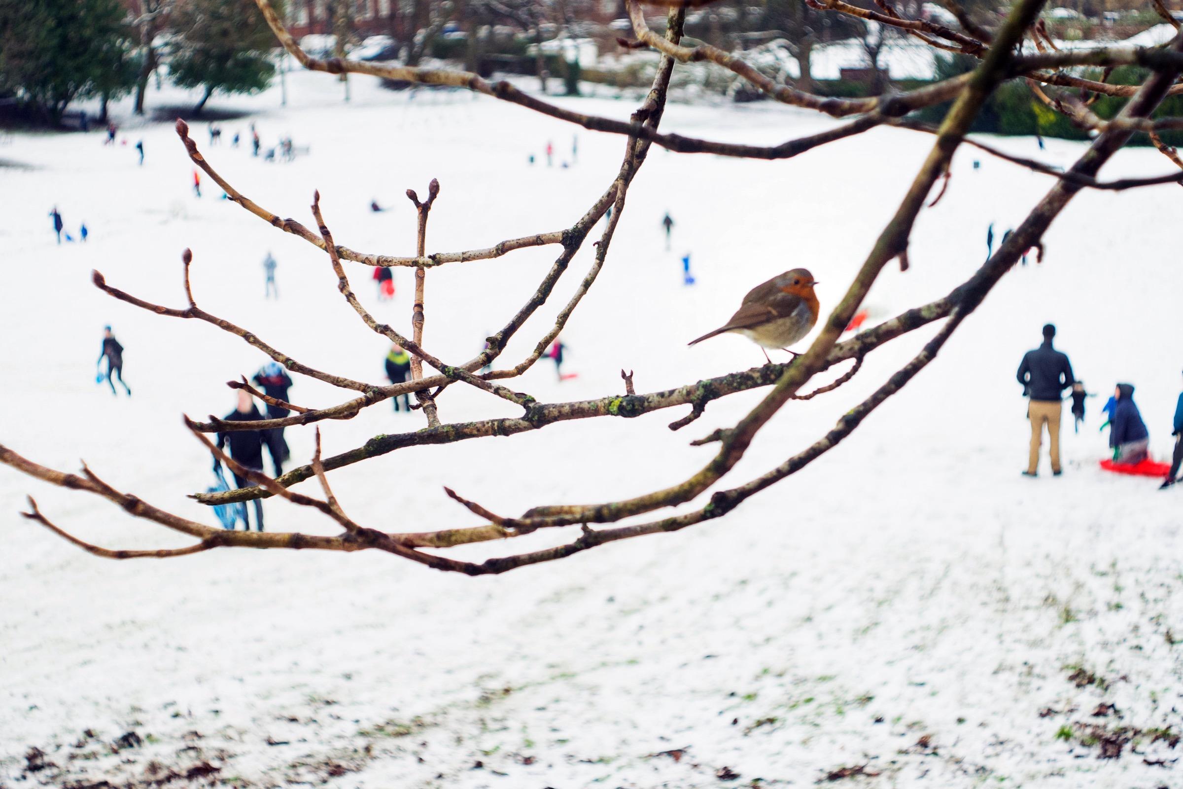 Queen's Park Glasgow Snow
