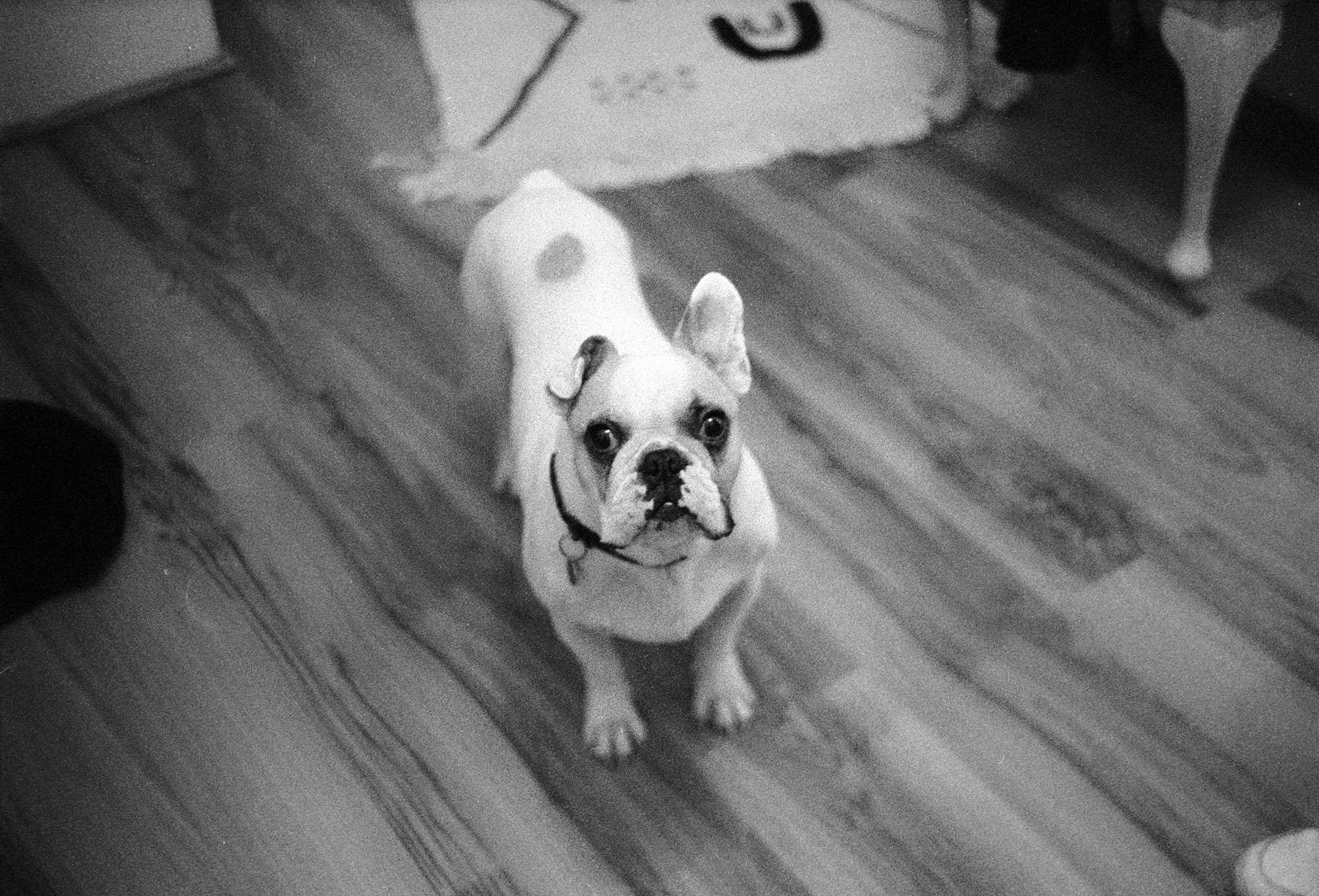 Leica M6 dog