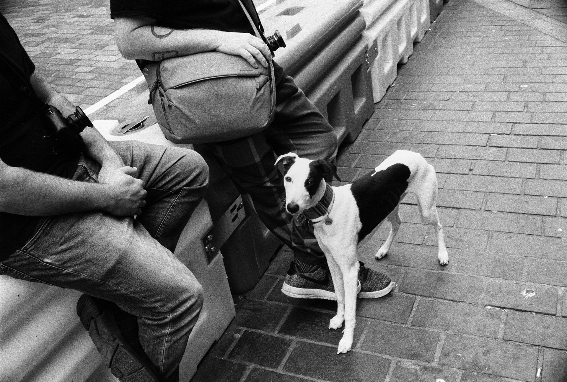 35mm dog